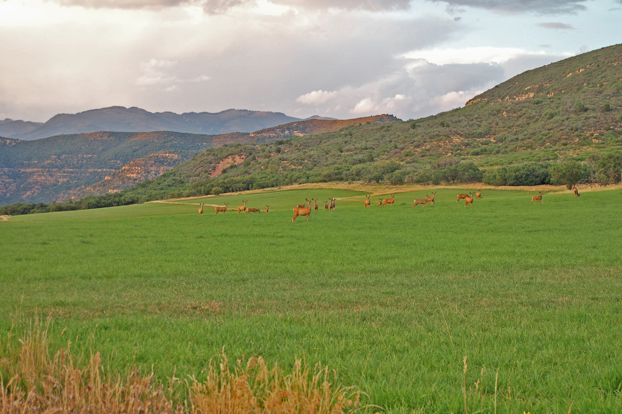 Deer herd on Esperanza Ranch for sale in Colorado