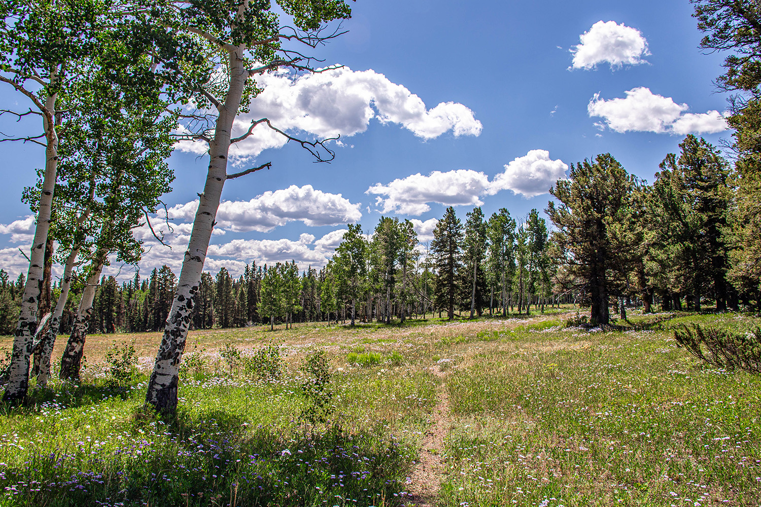 Trail on Blue Creek Mesa Ranch - Property for sale in Western Colorado