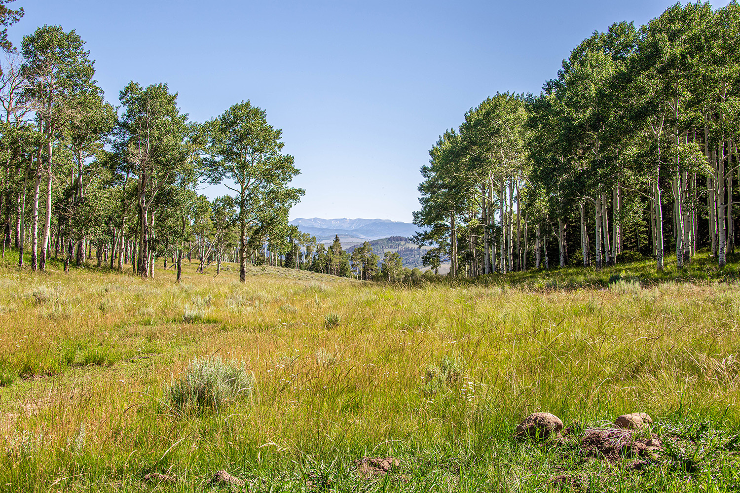 Mountain Property for Sale in western Colorado