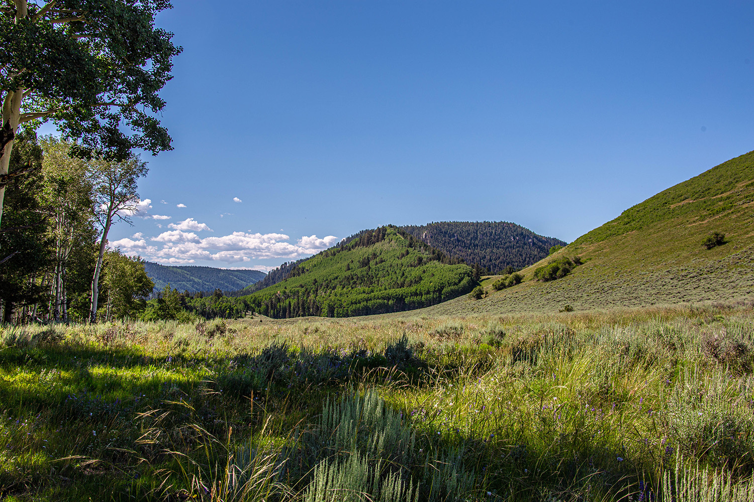 Blue Creek Mesa Ranch Property for sale in Western Colorado