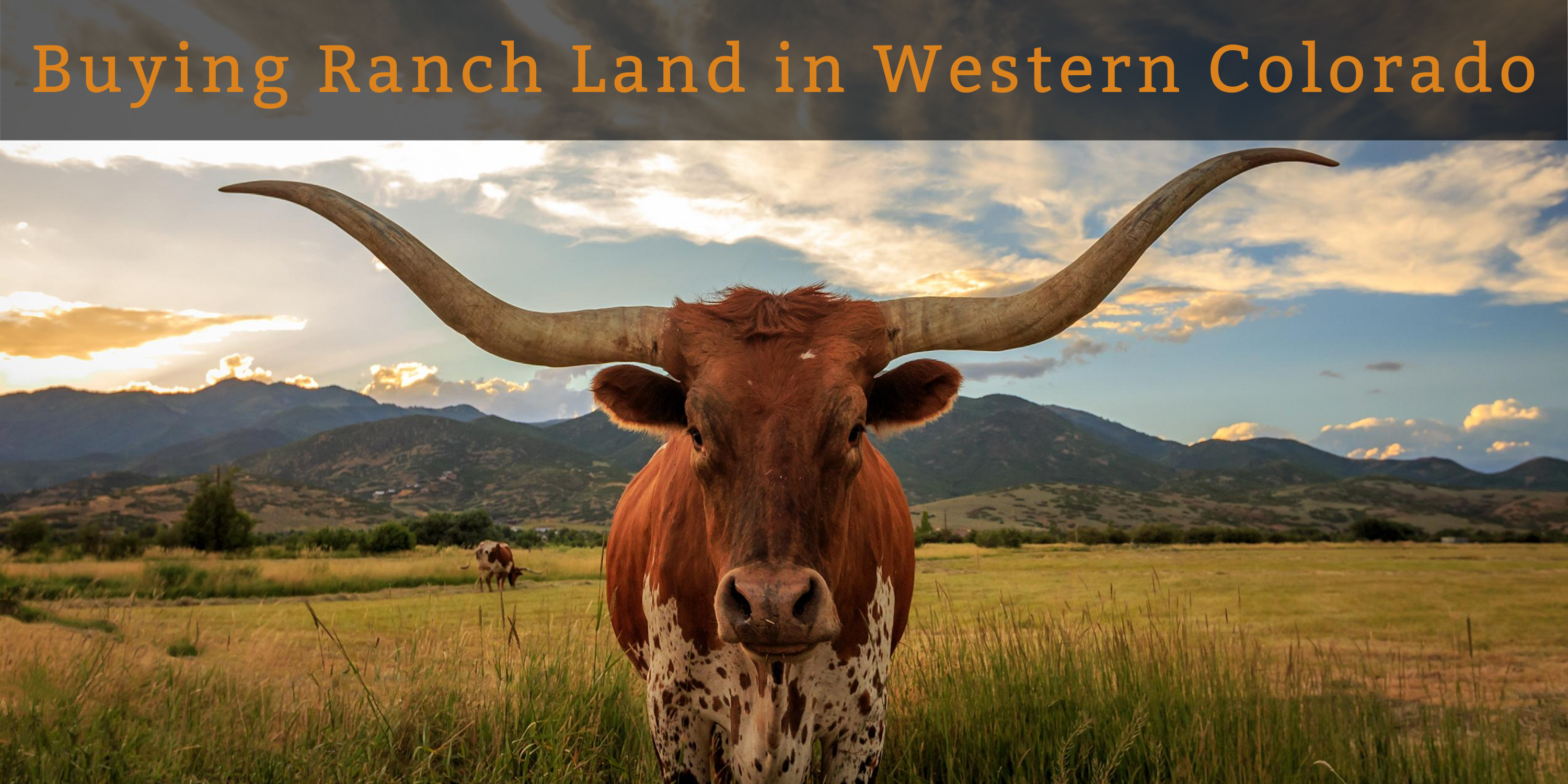 Longhorn facing the camera with mountains in the background show what to expect when buying ranch land in Western Colorado