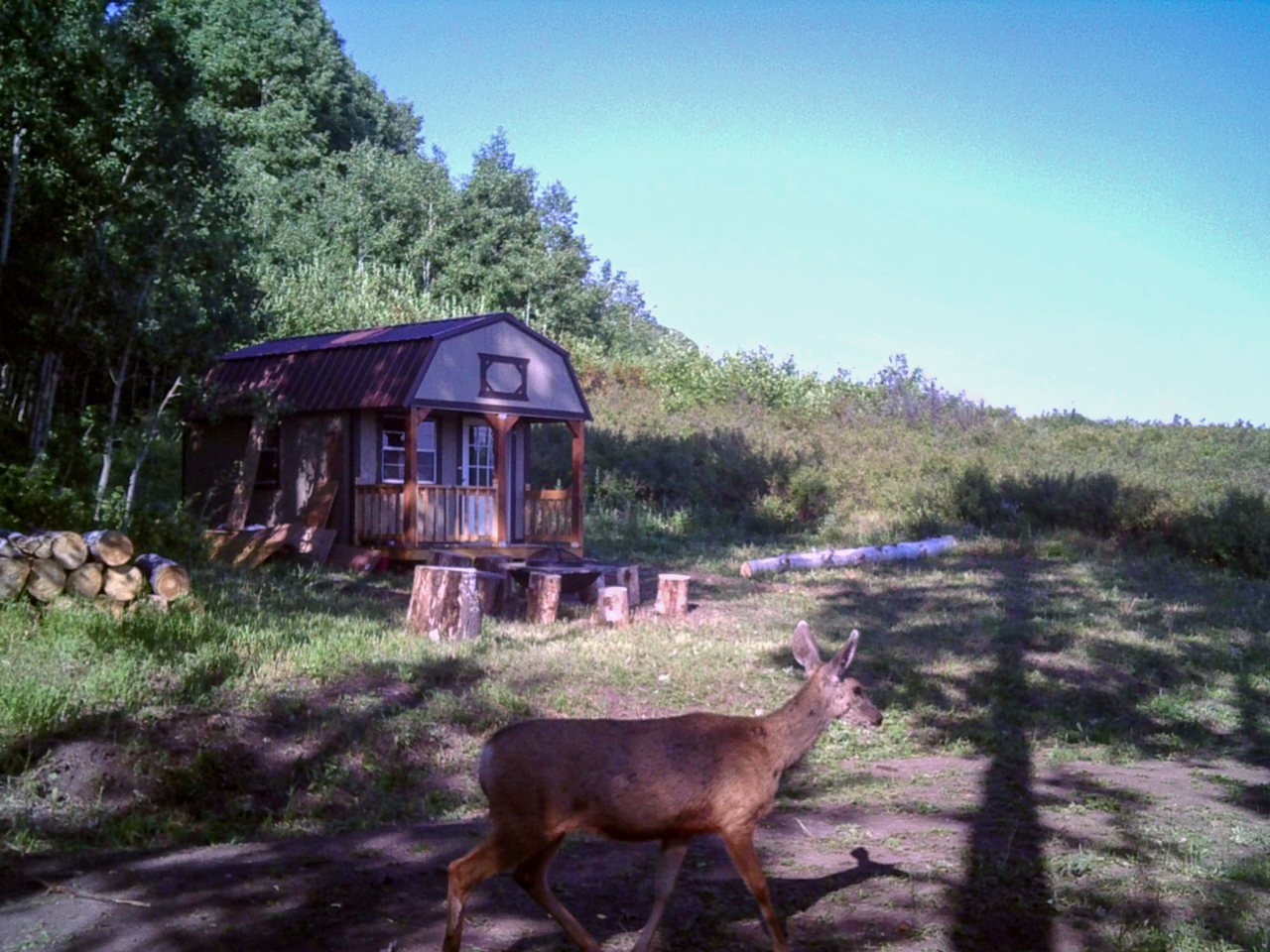 deer in front of hunting cabin
